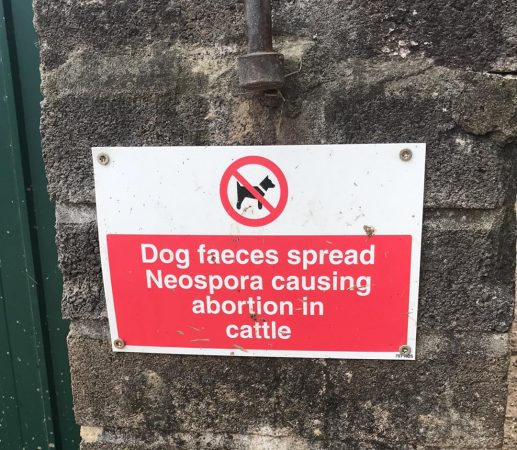 Neospora warning sign